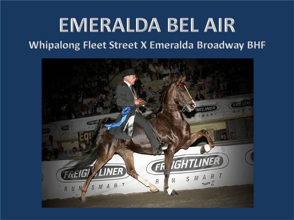 history-of-emeralda-saddlebreds-16