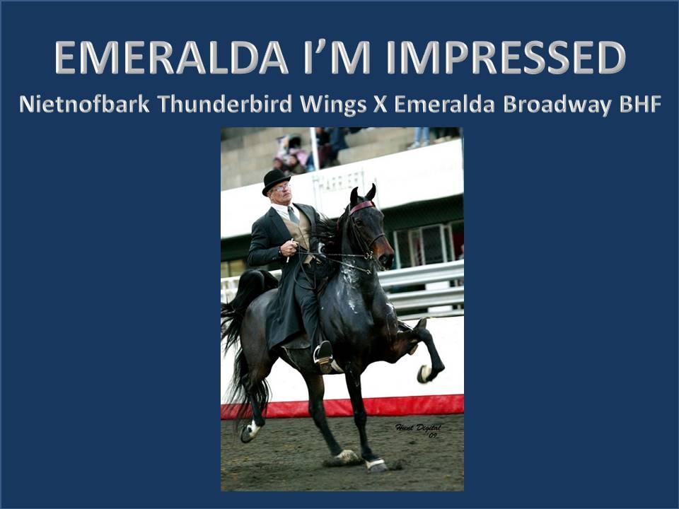 history-of-emeralda-saddlebreds-17