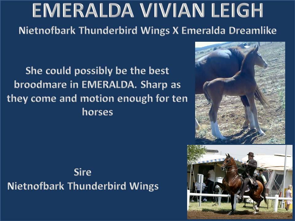history-of-emeralda-saddlebreds-20