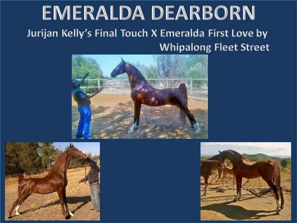 history-of-emeralda-saddlebreds-21