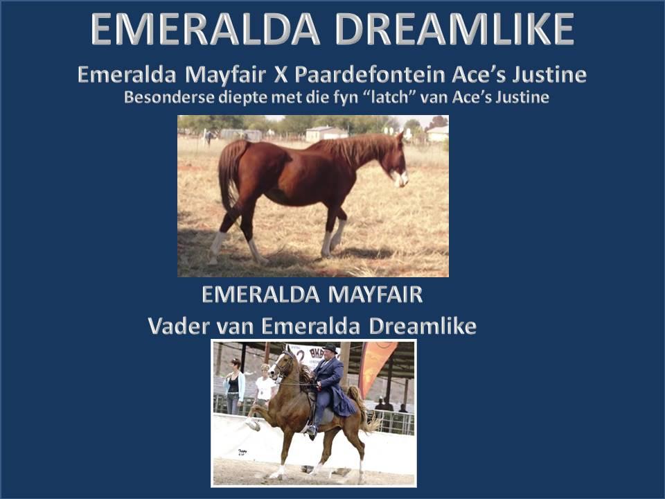 geskiedenis-van-emeralda-saddlebreds-18