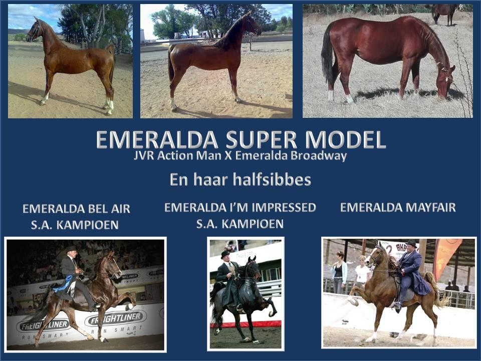 geskiedenis-van-emeralda-saddlebreds-22