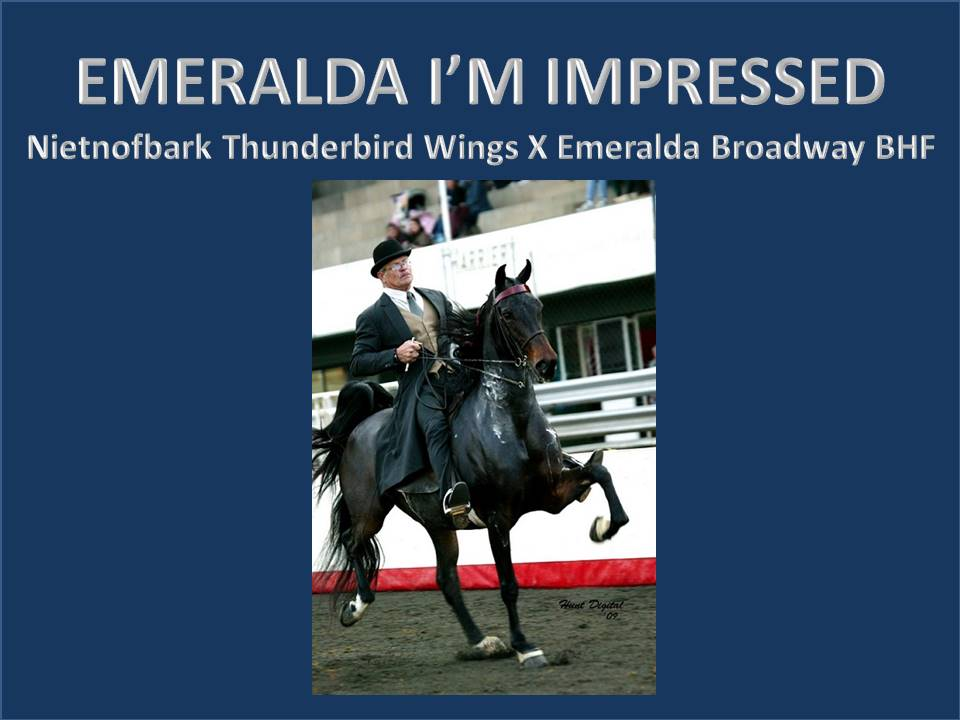 history-of-emeralda-saddlebreds-17
