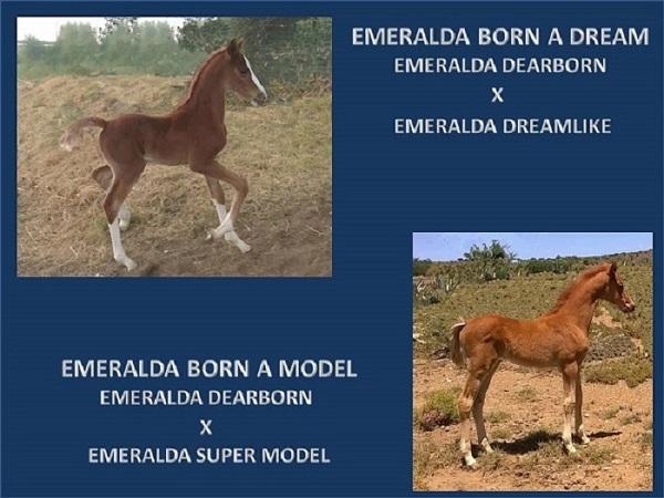 emeralda-born-a-dream-born-a-model-powerpoint